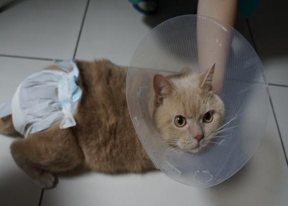 ветеринарные услуги терапия и ветклиника